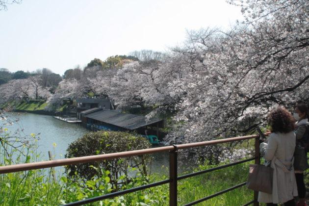 3月26日の風景